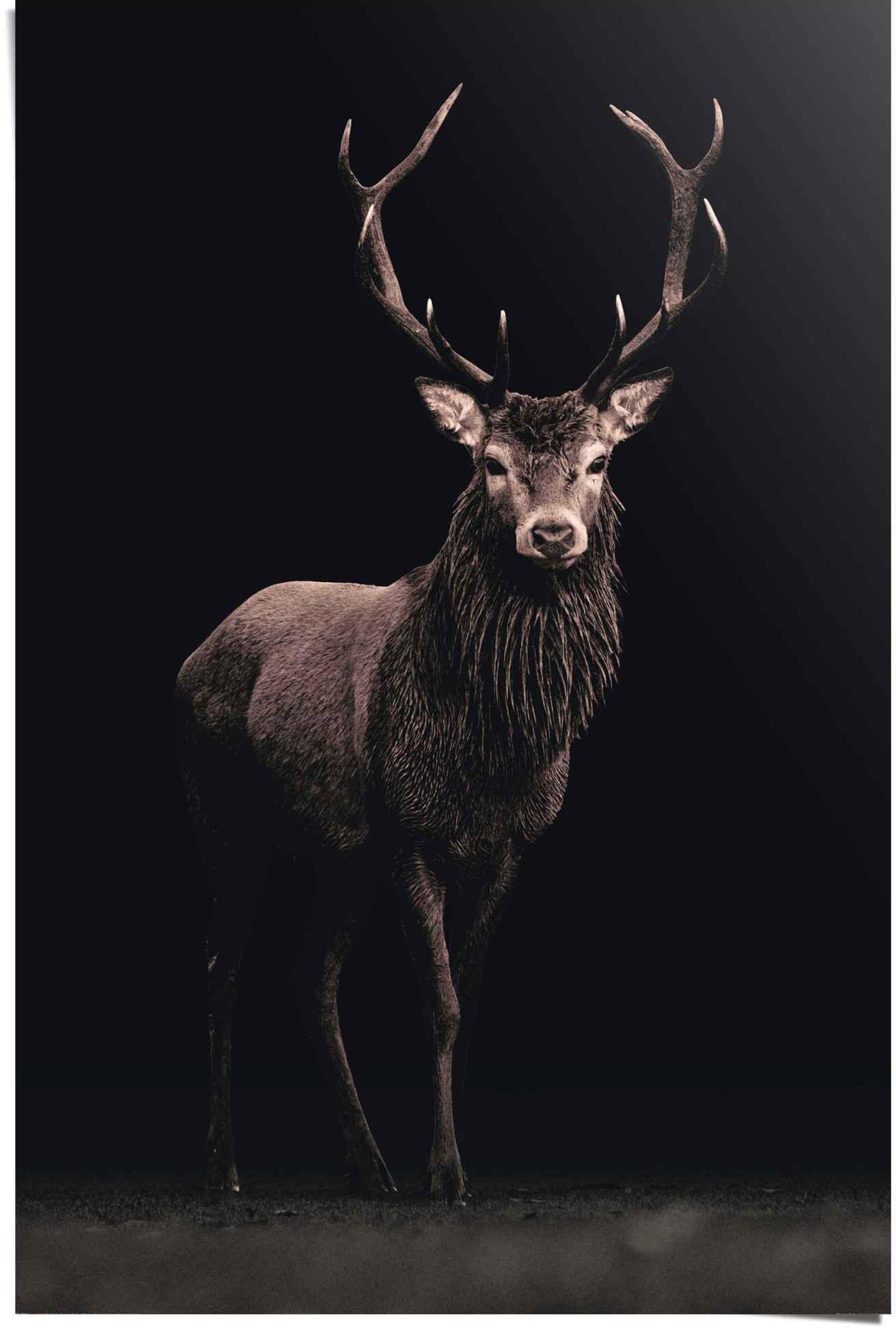 Reinders! Poster edelhert (1 stuk) in de webshop van OTTO kopen