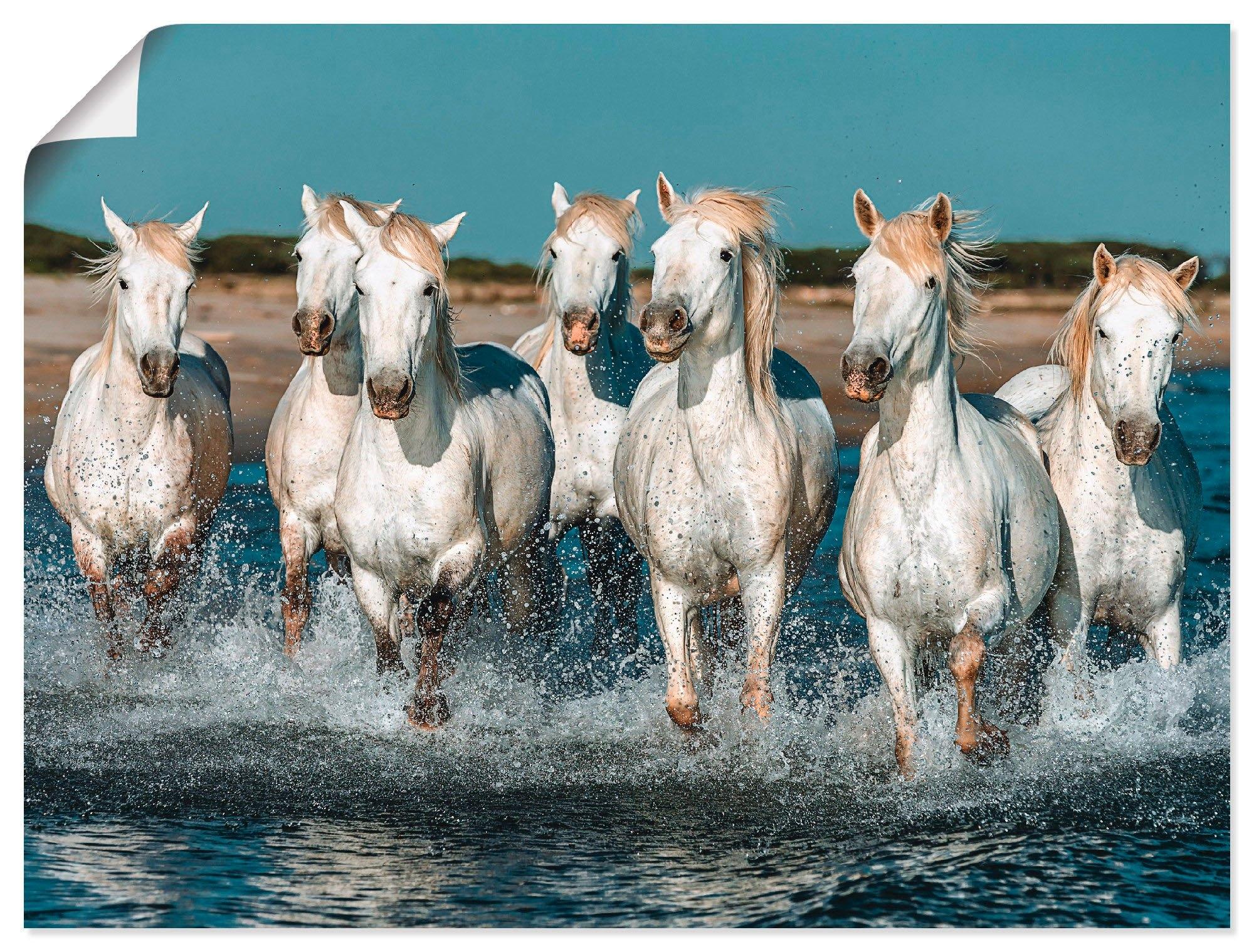 Artland artprint Camargue paarden galopperen op het strand in vele afmetingen & productsoorten - artprint van aluminium / artprint voor buiten, artprint op linnen, poster, muursticker / wandfolie ook geschikt voor de badkamer (1 stuk) in de webshop van OTTO kopen