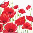 artland artprint rode klaprozen i in vele afmetingen  productsoorten - artprint van aluminium - artprint voor buiten, artprint op linnen, poster, muursticker - wandfolie ook geschikt voor de badkamer (1 stuk) rood