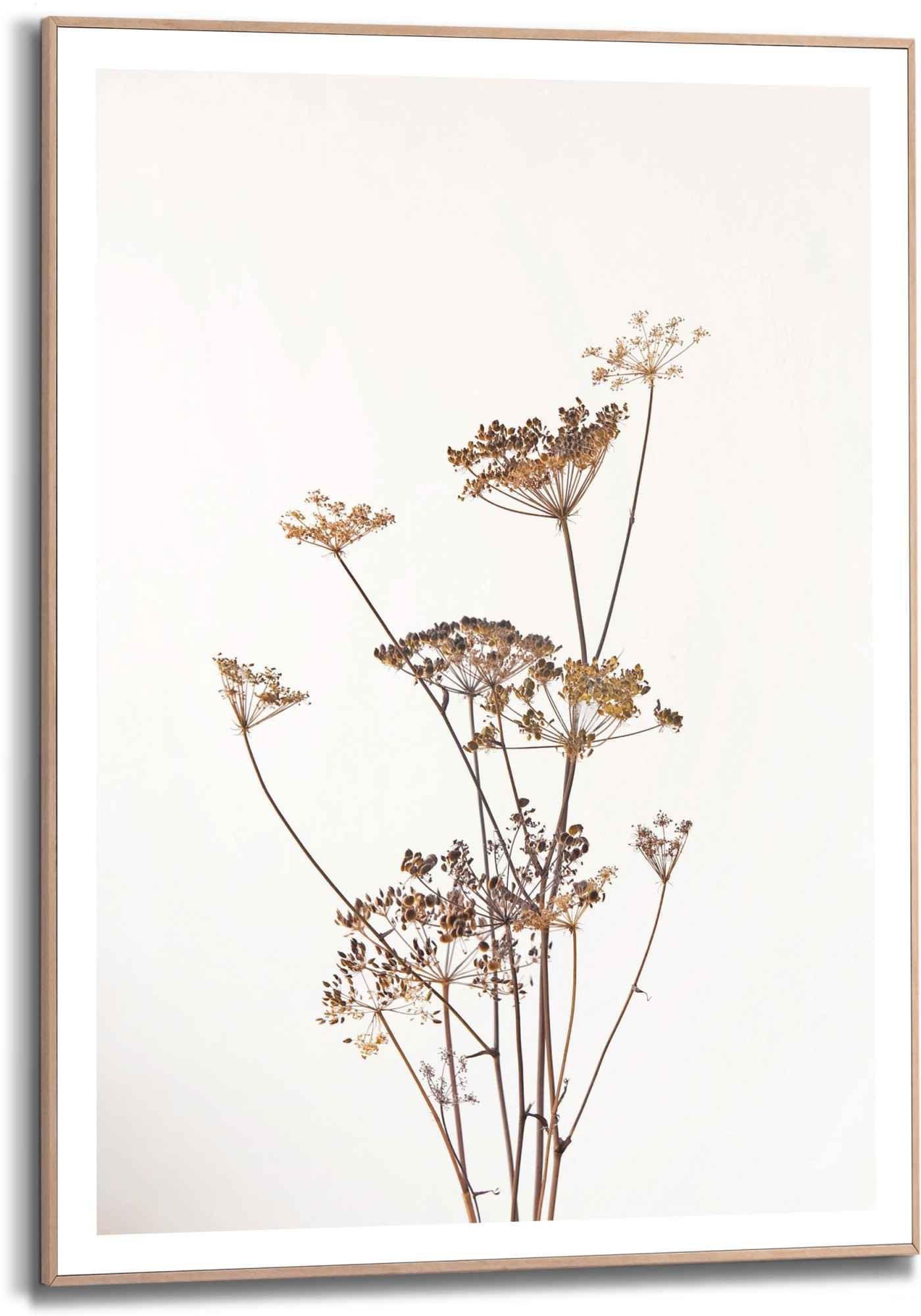 Reinders! wanddecoratie Gerahmtes Bild Bärenklau Natur - Pflanz - Getrocknet - Blumen (1 stuk) in de webshop van OTTO kopen