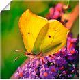 artland artprint vlinder in de tuin in vele afmetingen  productsoorten - artprint van aluminium - artprint voor buiten, artprint op linnen, poster, muursticker - wandfolie ook geschikt voor de badkamer (1 stuk) geel
