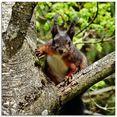 artland print op glas eekhoorntje blik (1 stuk) beige