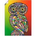 artland artprint »eule« multicolor