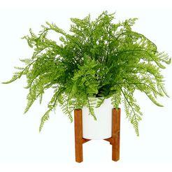 delavita kunstplant »wilhelmine« groen