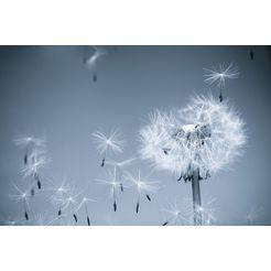 bmd fotobehang »dandelion in the wind« multicolor