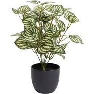 botanic-haus kunst-potplanten »zebrina« (1 stuk) groen