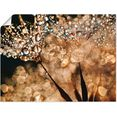 artland artprint »pusteblume goldschimmer« goud