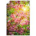 artland artprint japanse kersenbloesem in vele afmetingen  productsoorten - artprint van aluminium - artprint voor buiten, artprint op linnen, poster, muursticker - wandfolie ook geschikt voor de badkamer (1 stuk) roze
