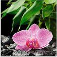 artland print op glas roze orchidee op zwarte zen stenen (1 stuk) roze