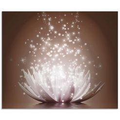 artland keukenwand magie der lotus-blume (1-delig) bruin
